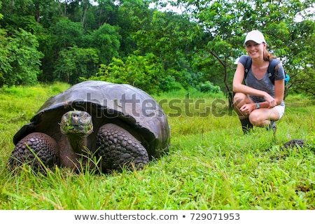 Galapagos Giant Tortoises on Santa Cruz Island in Galapagos Islands Stock photo © Maridav