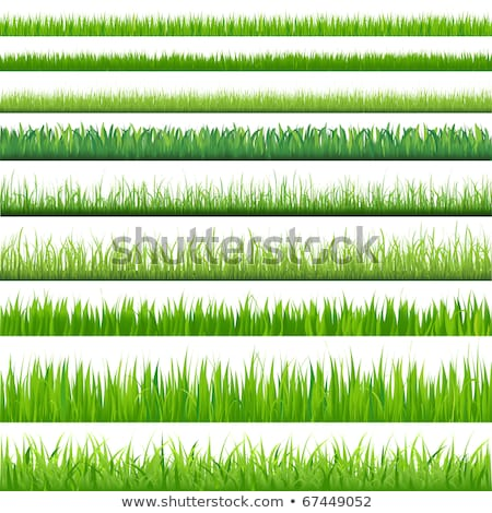 Grama verde isolado branco grama abstrato natureza Foto stock © elenaphoto