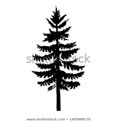 Larch Pine Stock photo © devon