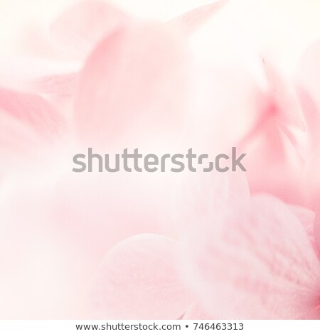brown flower abstract background or texture Stock photo © tarczas