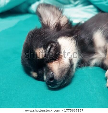 Slaperig puppy handen persoon witte Stockfoto © feedough