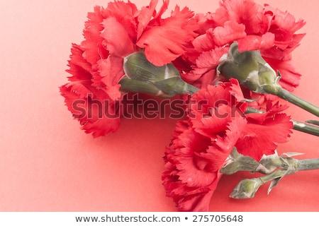 букет три розовый зеленый лист изолированный Сток-фото © boroda