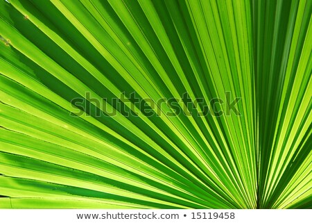 palmblad · groene · abstract · achtergrond · leven - stockfoto © cozyta