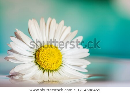 Beauty and grace Stock photo © pressmaster