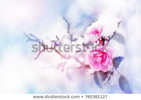 морозный · лист · утра · мороз · завода · листьев - Сток-фото © melpomene