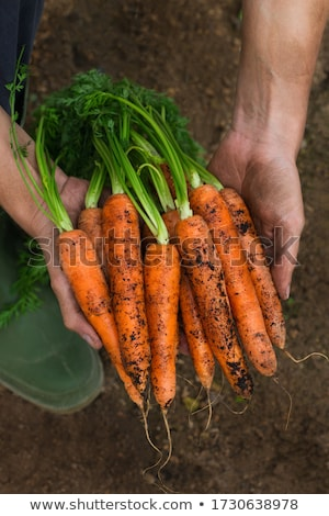 cenoura · jeans · campo · fazenda · grama · saúde - foto stock © stevanovicigor