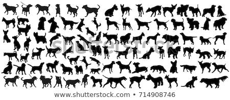 Psów sylwetka zestaw psa szczęśliwy uruchomiony Zdjęcia stock © huhulin