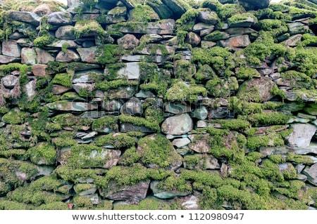 mokro · mur · budowy · kamień · cegły · architektury - zdjęcia stock © pzaxe