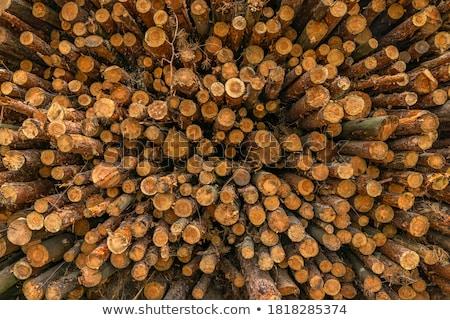 erdő · veszteség · kár · fa · zöld · ipar - stock fotó © grafvision