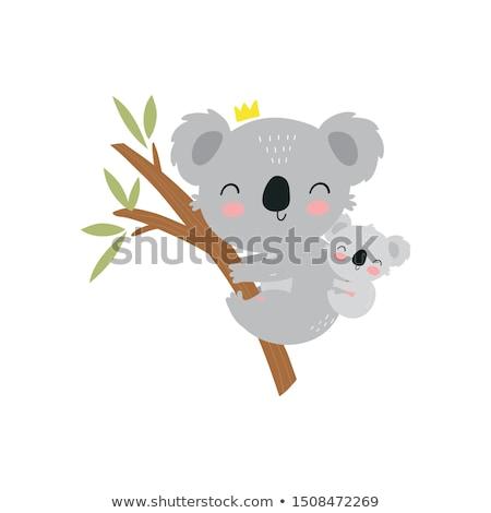 cute · koala · blanco · ilustración · feliz · arte - foto stock © jenpo