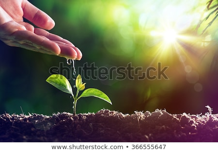 Water and plants Stock photo © badmanproduction