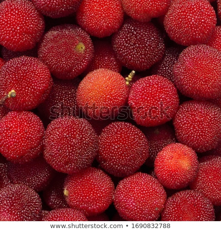 Red bayberry fruits Stock photo © bbbar