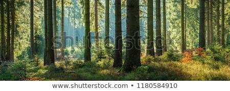 indian summer forest  Stock photo © meinzahn
