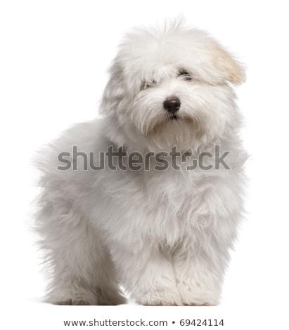 mão · desenho · retrato · cão · cabelo · pintar - foto stock © cynoclub