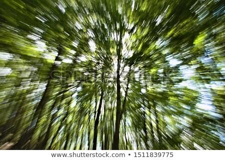 лес · эффект · зеленый · листва · выстрел - Сток-фото © mlyman