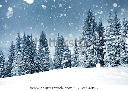 Foto stock: Invierno · forestales · azul · blanco · grunge · pintura