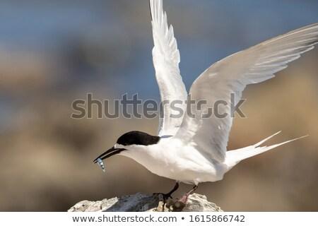 Vlucht New Zealand kust zee vogel Stockfoto © rghenry