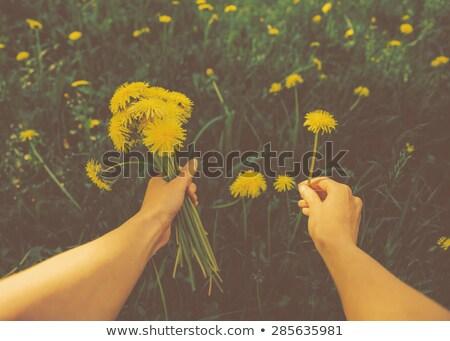 Kéz tart zöld növények retro szűrő Stock fotó © happydancing