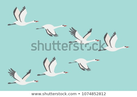 Madár fehér kócsag tavacska tavasz víz Stock fotó © OleksandrO