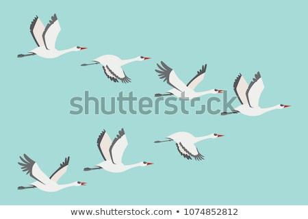 Vogel witte reiger vijver voorjaar water Stockfoto © OleksandrO