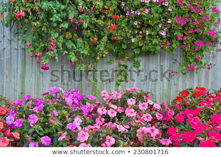 Wooden fence with flowers in the garden Stock photo © bluering