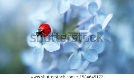 синий цветок Ladybug иллюстрация цветы природы фон Сток-фото © bluering