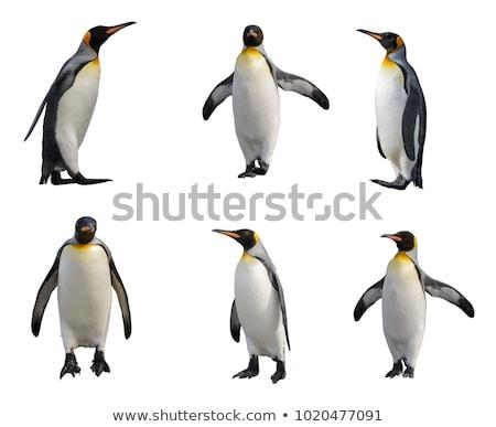 かわいい 漫画 ペンギン 白 愛 魚 ストックフォト © nezezon
