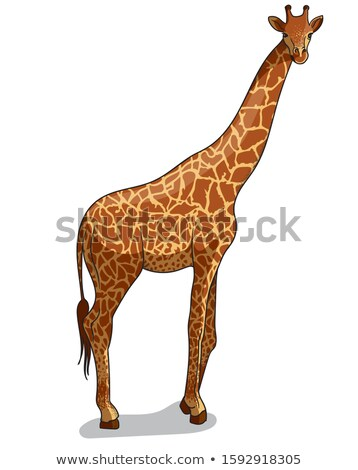 Giraffe Giraffa Camelopardalis Cartoon Animal Stock photo © robuart