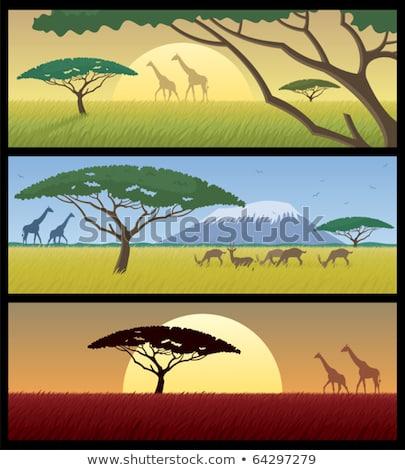 Gazelle silhouette africaine paysage illustration Photo stock © adrenalina