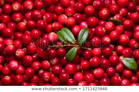 Berry fruit leaves Stock photo © Digifoodstock