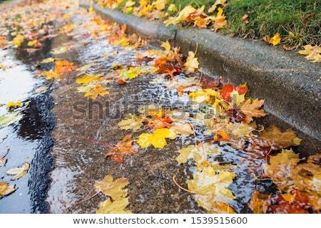 gutter on the street stock photo © nneirda