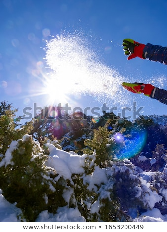 ziria mountain fir trees covered with snow on a winter day south peloponnese greece stock photo © ankarb