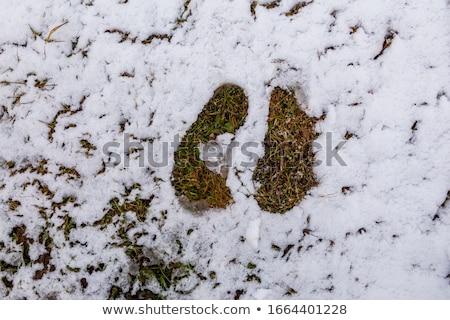 Nieve creciente canabis marihuana hoja verde blanco Foto stock © romvo