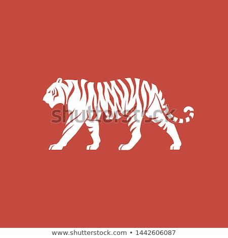 тигр икона природы силуэта джунгли Сток-фото © Olena