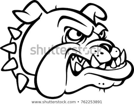Bull terrier vector illustration clip-art image stock photo © vectorworks51