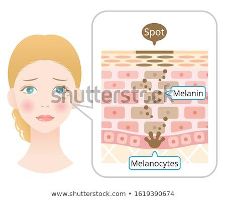 Emberi anatómia diagram lány máj illusztráció orvosi Stock fotó © bluering