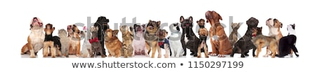 team of different breeds of cats and dogs look up Stock photo © feedough