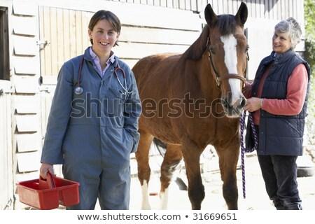 állatorvos · megvizsgál · ló · sztetoszkóp · farm · állás - stock fotó © monkey_business