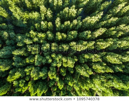 Aerial photograph of a summer day on green foliage forest. Natural background. Environmental conserv Stock photo © artjazz