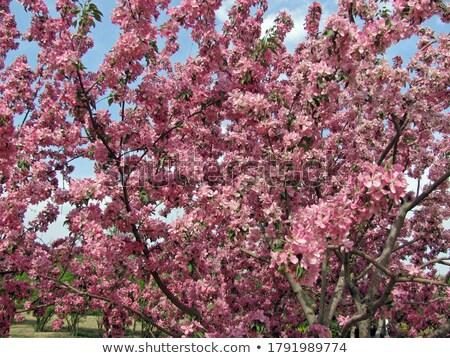 Ramo completo flor rosa pétalas foco Foto stock © sarahdoow