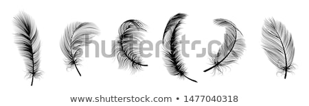 Bolyhos tollak szett művészi fekete madár Stock fotó © blackmoon979