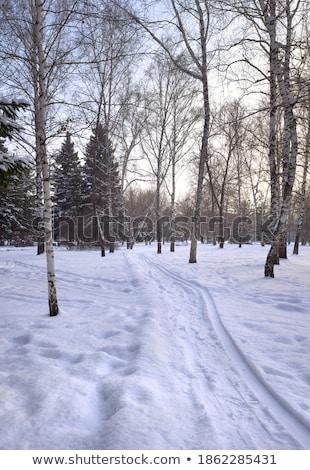 Yol huş ağacı kırağı kış gökyüzü ağaç Stok fotoğraf © LianeM