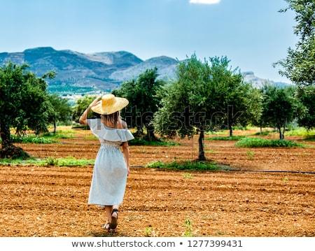 Olive jardin Grèce nature botanique Photo stock © Anneleven