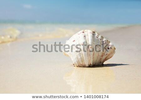 Scallop Seashell On The Reflective Sand At Beach Stock photo © AndreyPopov