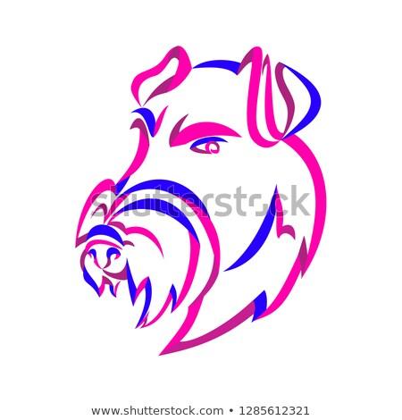 Manchester terrier szalag művészet fürtös stílus Stock fotó © patrimonio