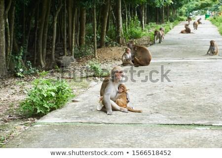 Maymun oturma ağaç ada Vietnam doğa Stok fotoğraf © galitskaya