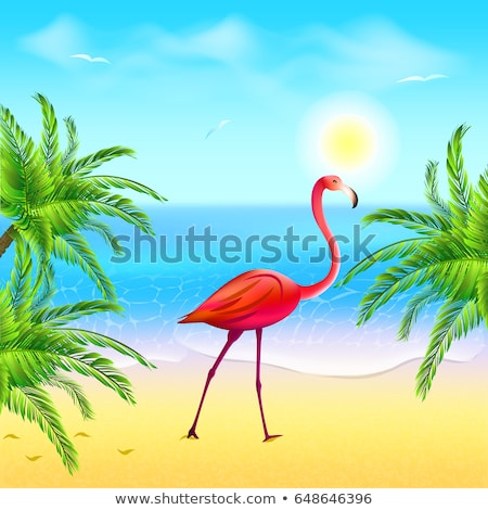 Standing in the water flamingo Stock photo © barsrsind