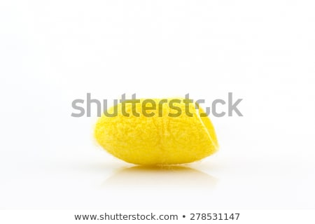butterfiles of silk worm and cocoon yellow stock photo © lunamarina