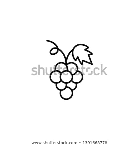 bunch of grapes icon vector outline illustration Stock photo © pikepicture
