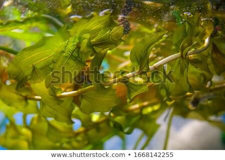 Unterwasser See Unterseite spät Sommer Stock foto © Mps197